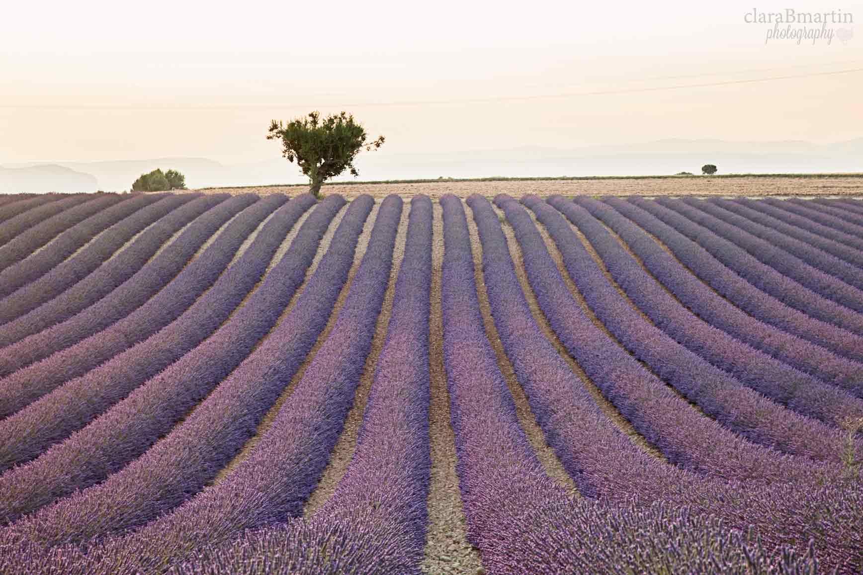 Lavender-fields-Provence-claraBmartin14