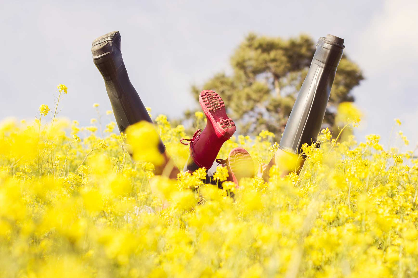 Campos-de-flores-amarillas-claraBmartin-08