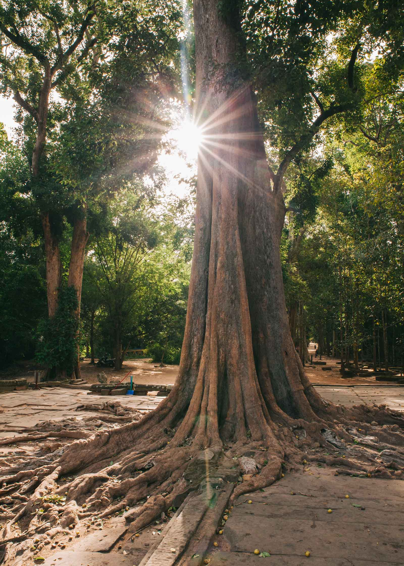 Camboya_242