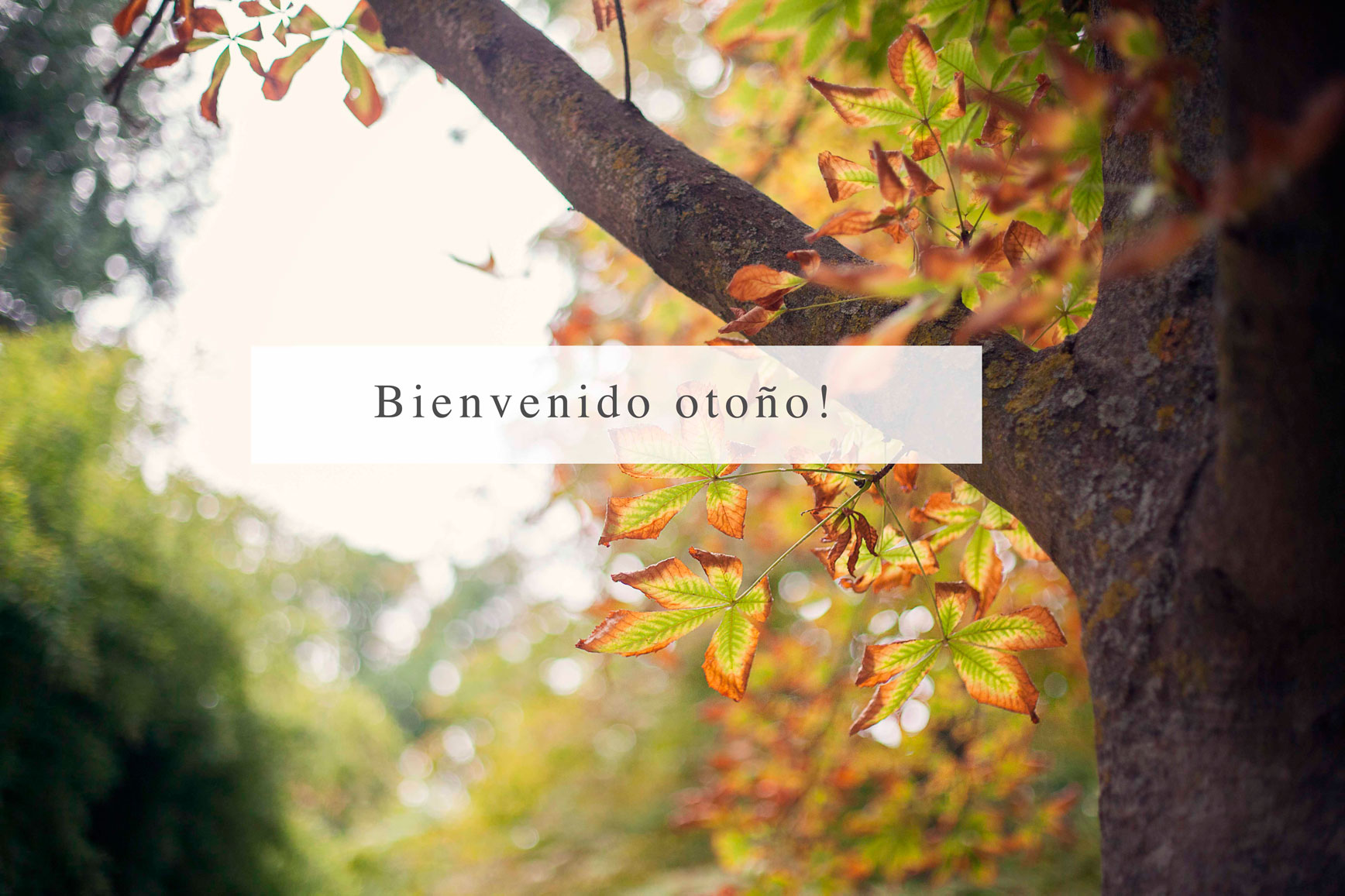 Otoño_claraBmartin07