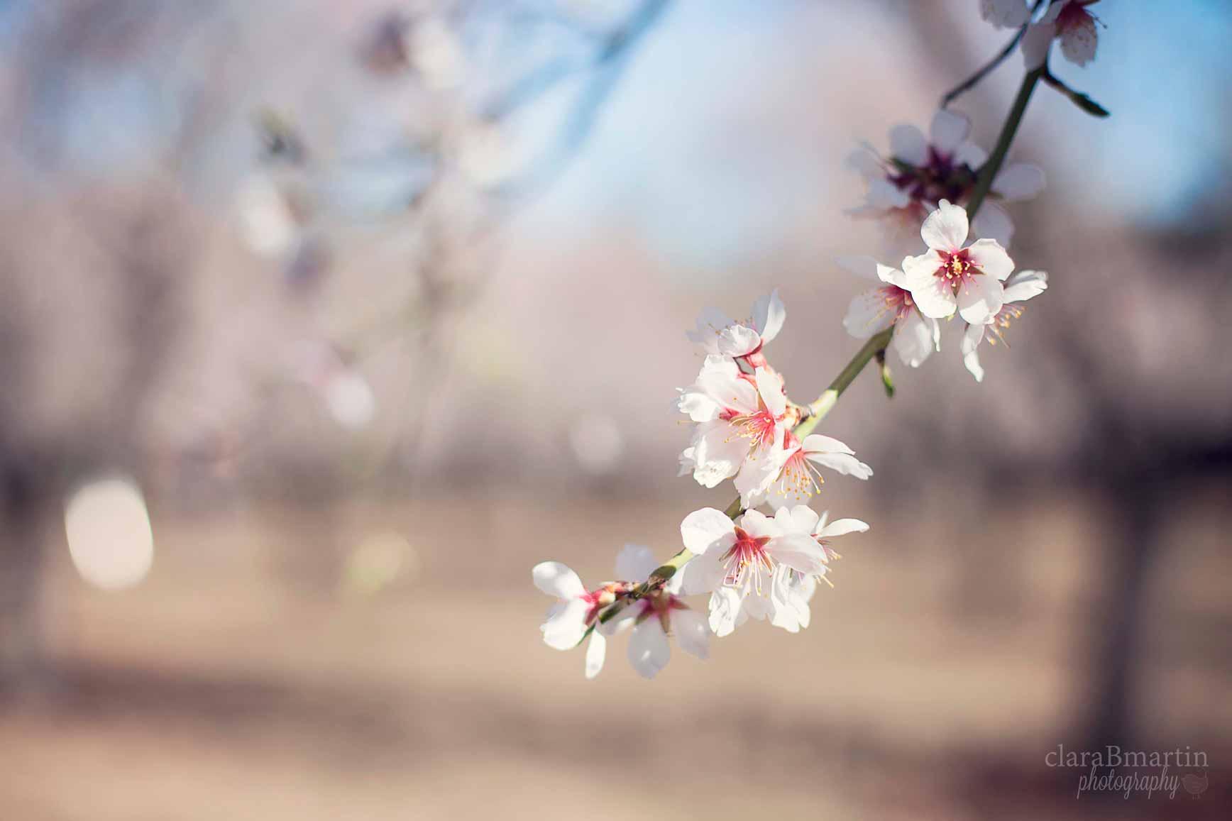 Primavera en La Quinta de los Molinos