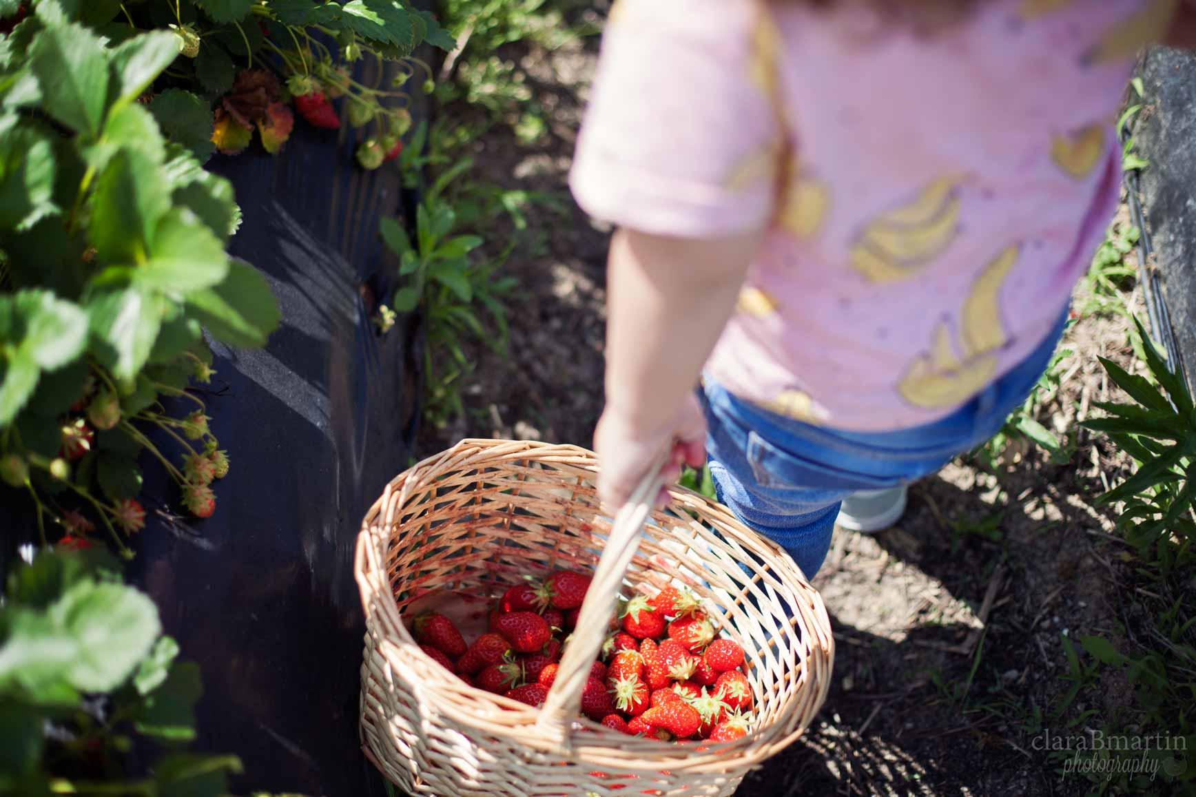 Recolectar fresas en Madrid