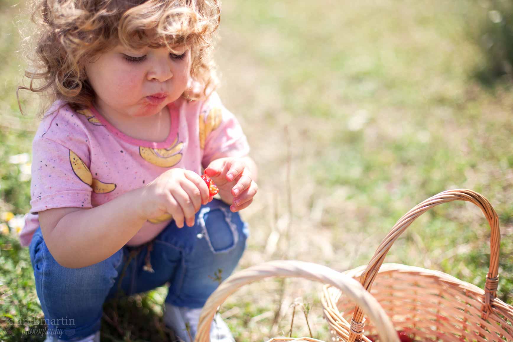Recolecta de fresas con niños