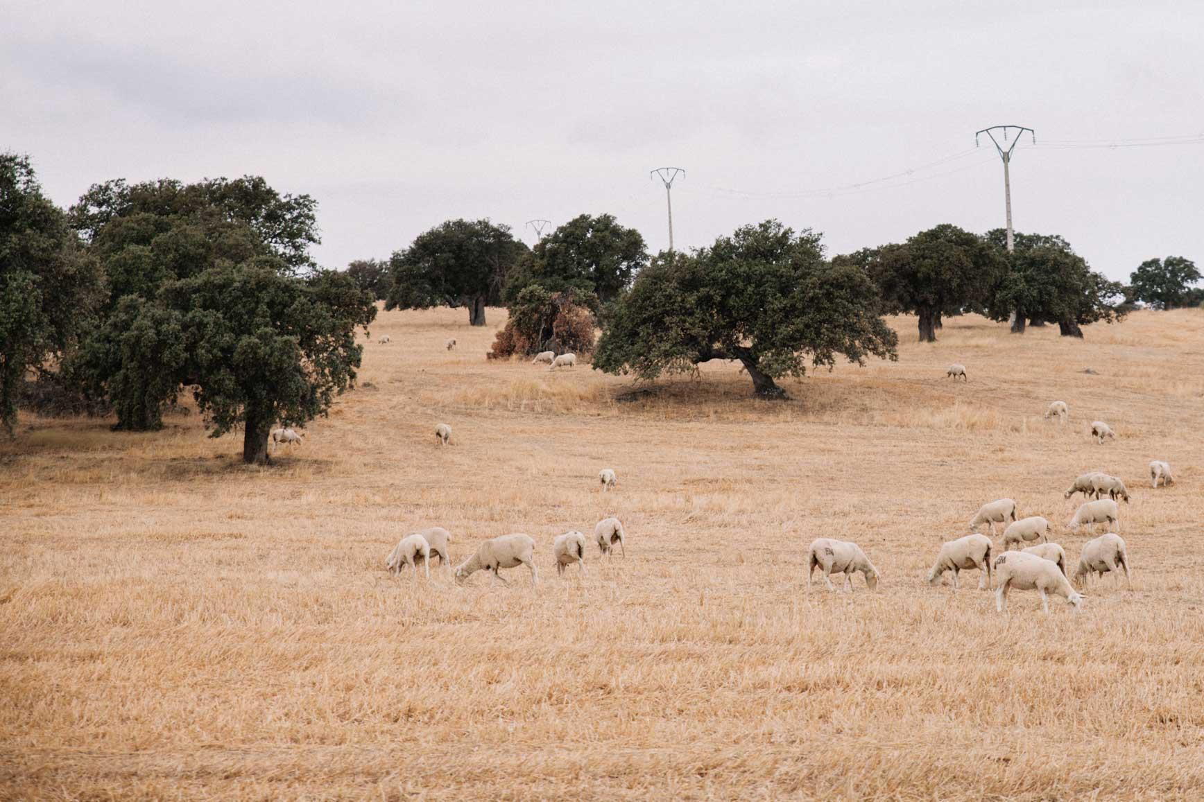 Casa-rural-La-Pajarona-16