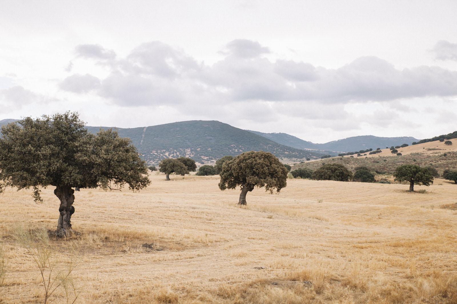 Casa-rural-La-Pajarona-17
