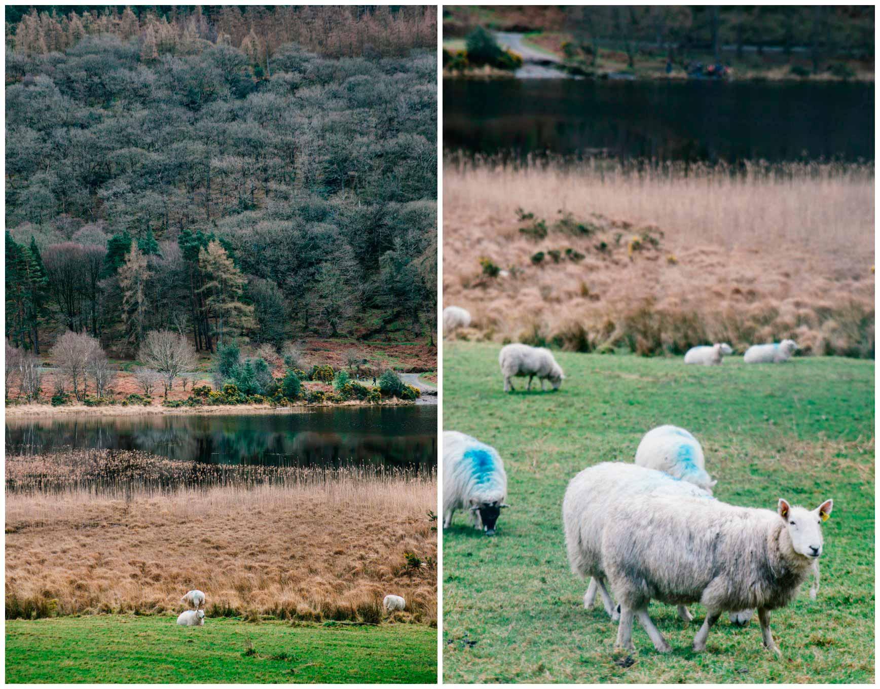 Glendalough-Irlanda-claraBmartin-03