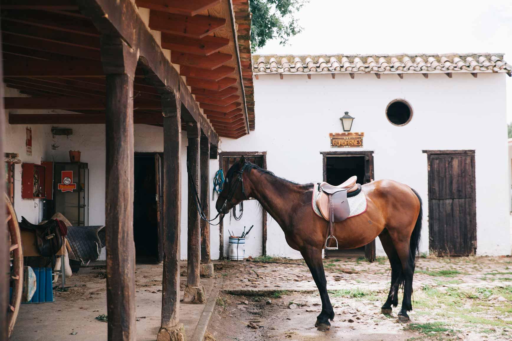 Ruta a Caballo - Caballos La Vereda_claraBmartin_37