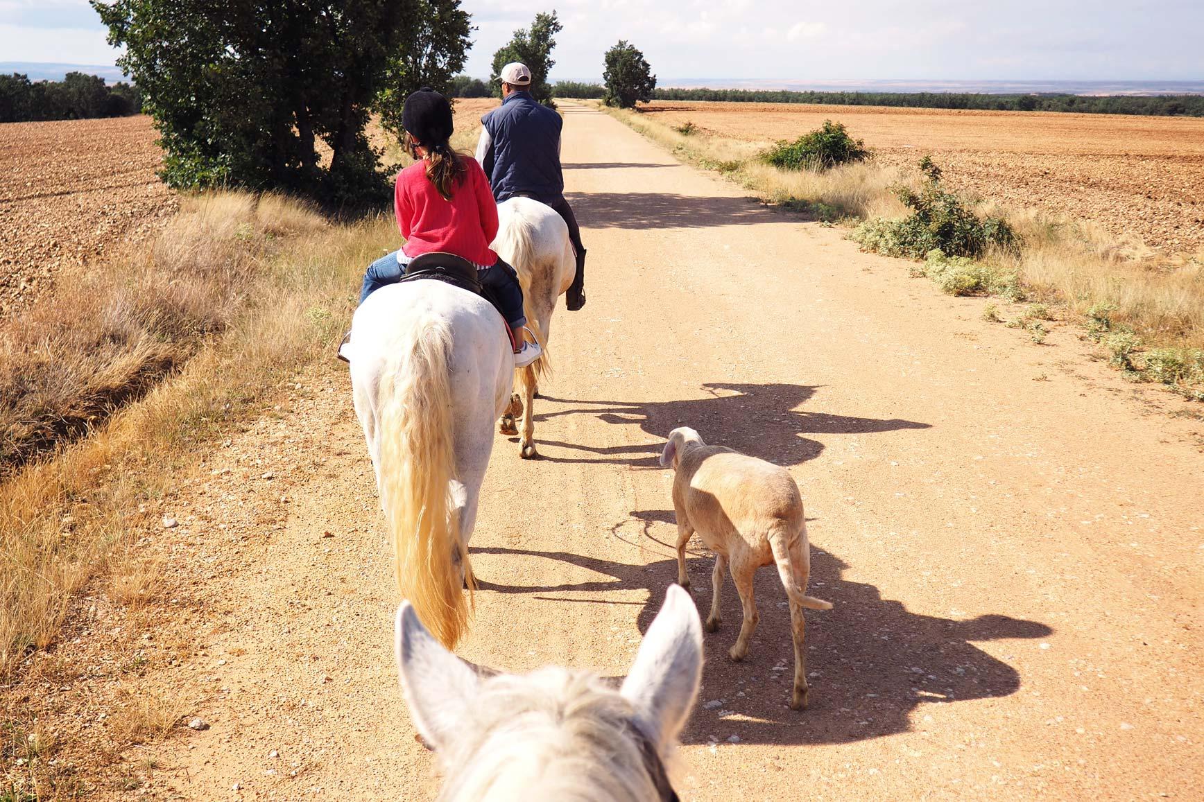 Ruta a Caballo - Caballos La Vereda_claraBmartin_56
