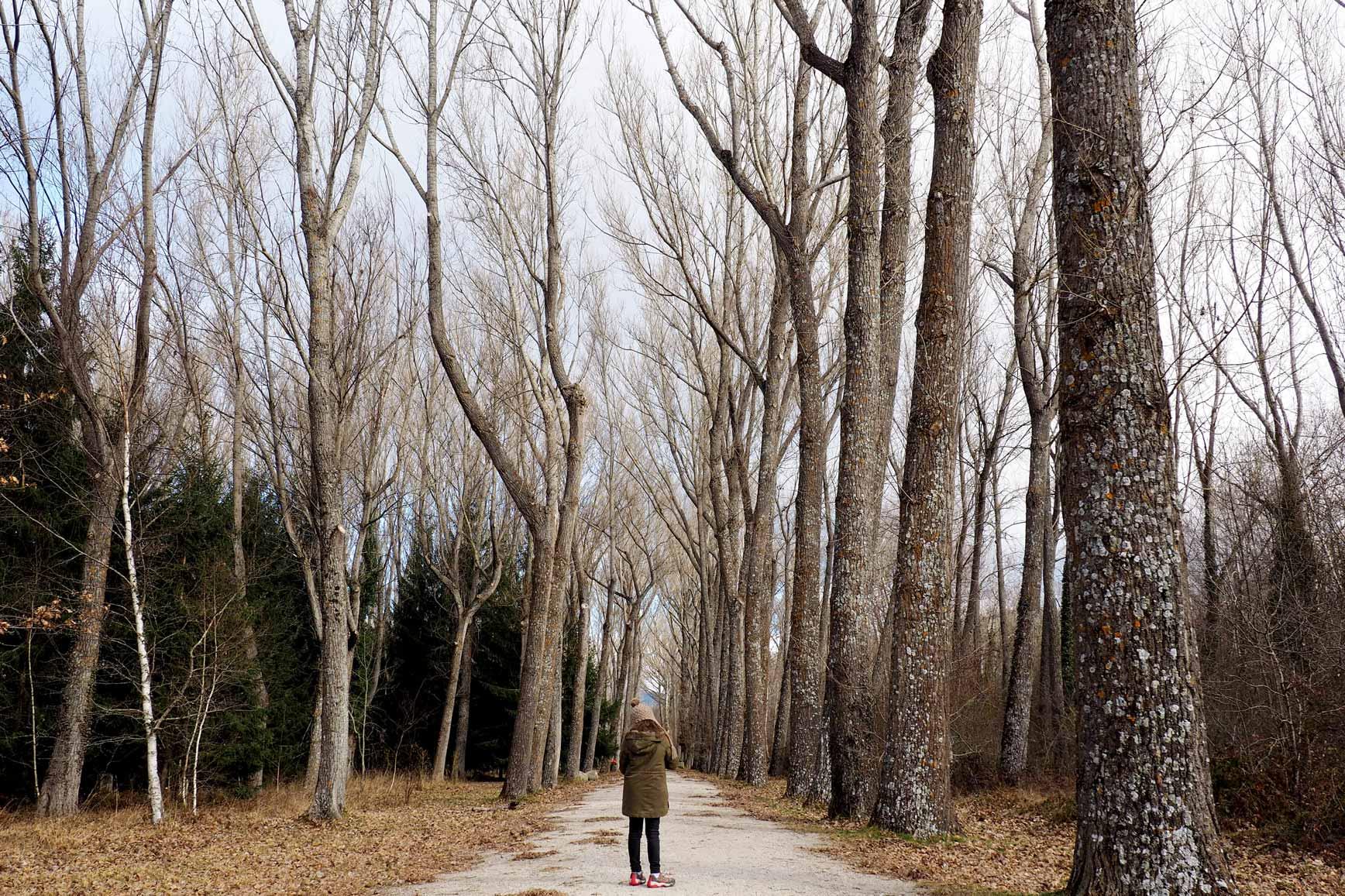Bosques cerca de Madrid para ir con niños - Bosque de Finlandia