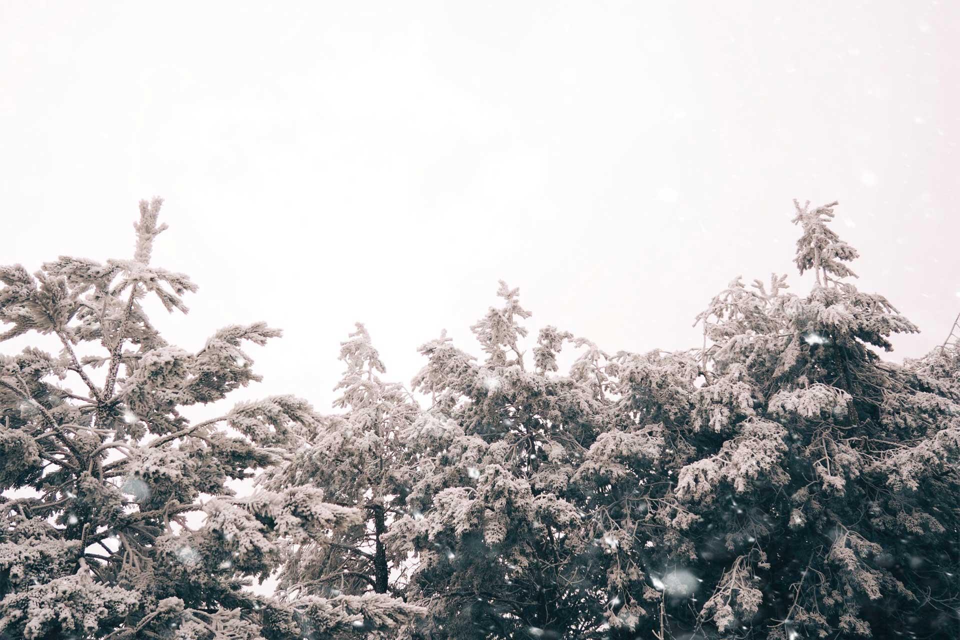 Sierra_2017