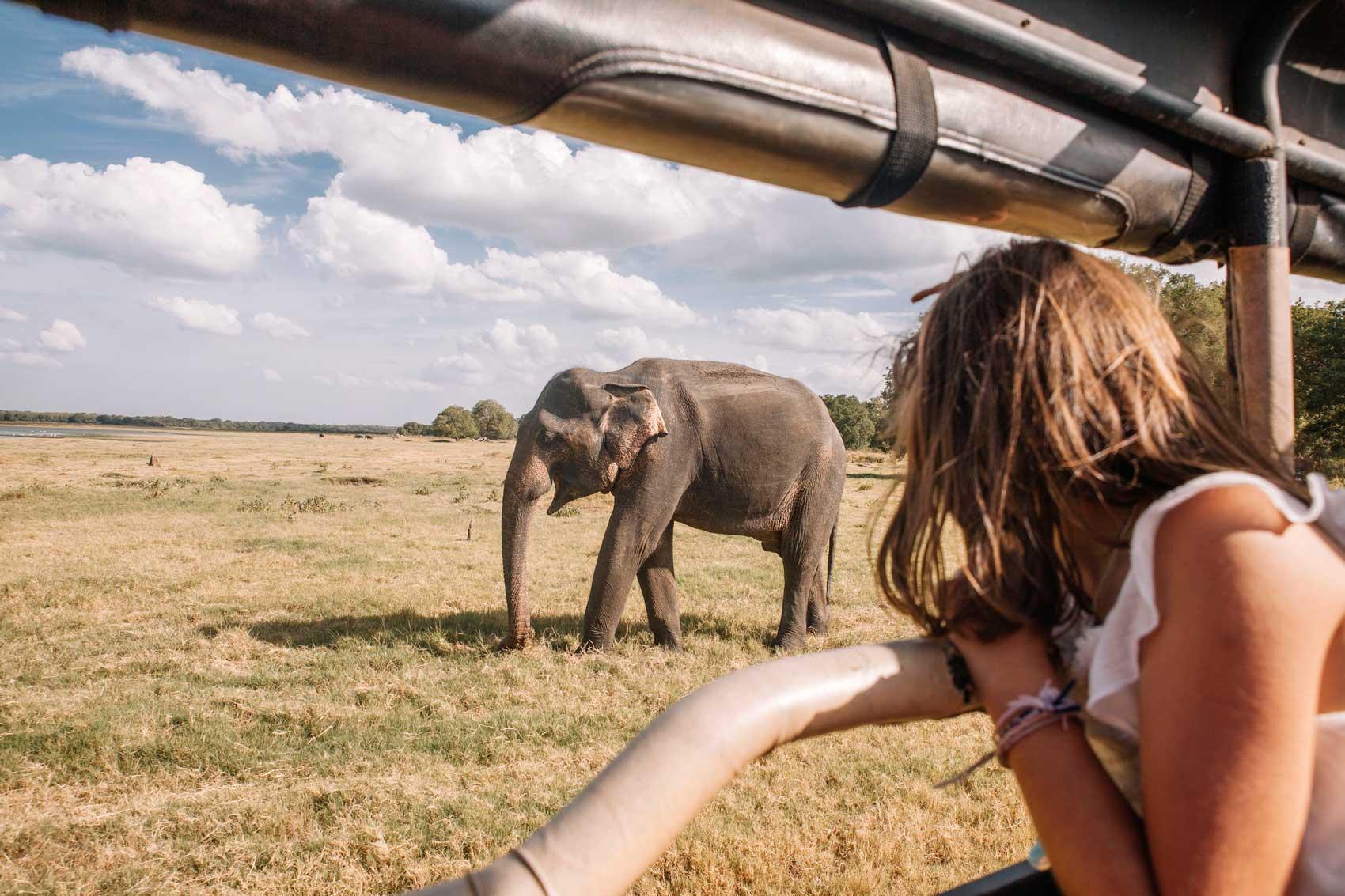 Minneriya Safari viaje a Sri Lanka