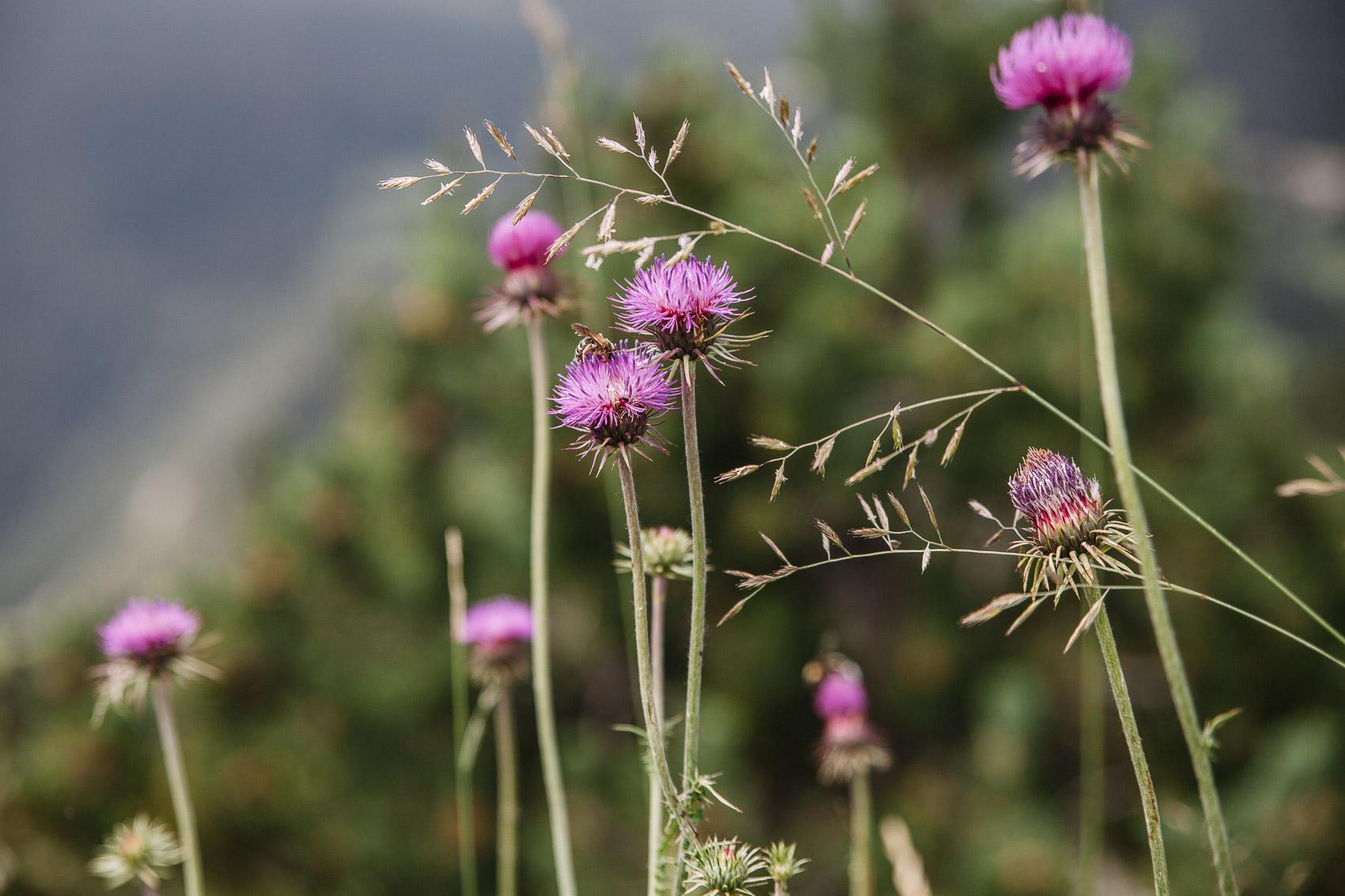 Flora de Andorra en verano